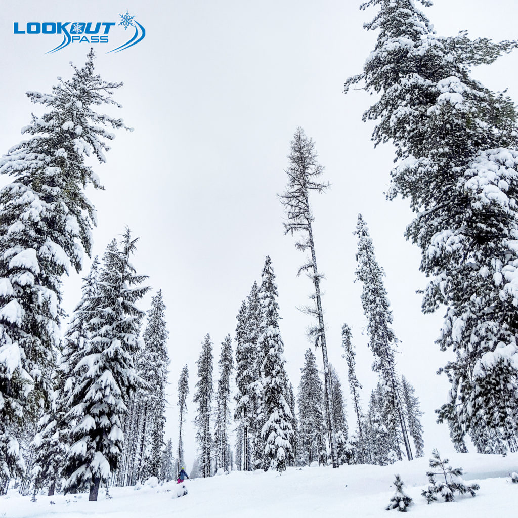 Lucky Friday Glades on the Montana side of Lookout Pass Ski Area